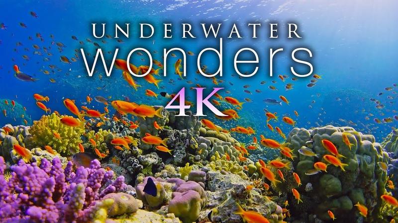 *NEW* 11 HOURS of 4K Underwater Wonders Relaxing Music - Coral Reefs Colorful Sea Life in UHD
