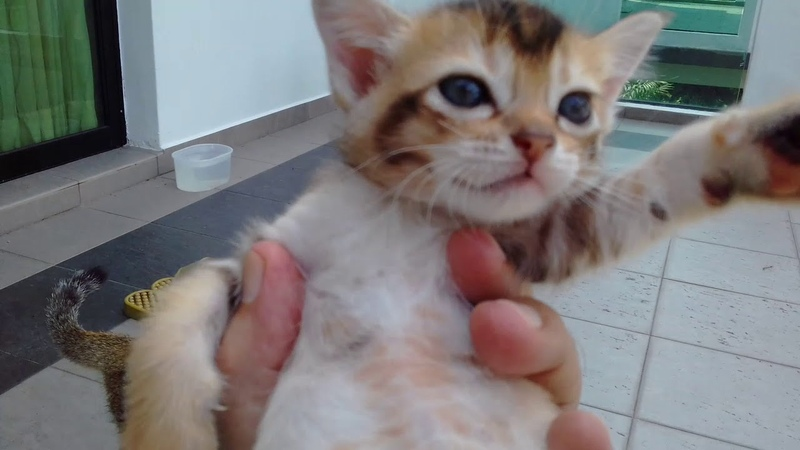 Today the cats are 661 days old, and ,the babies are 181 , new kittens are 33 days old