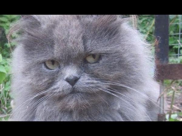 Крутое пике или летающий кот и меховая шапка