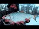 С ТАКОЙ ПЛОТВОЙ И ЯЗЬ НЕ НУЖЕН Рыбалка в полнолуние