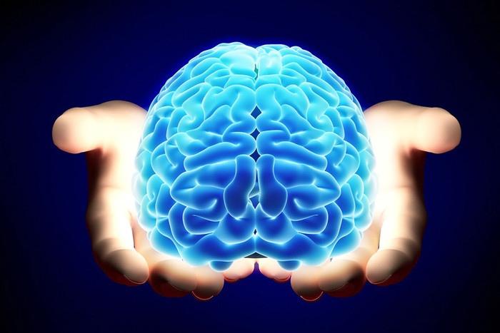 Каждая часть мозга контролирует что?