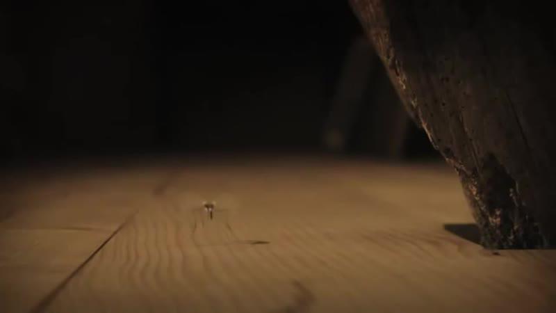 букашки - про комаров