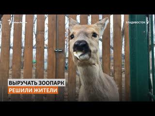 Жители Владивостока подкармливают животных в закрытом из-за коронавируса зоопарке   Сибирь.Реалии