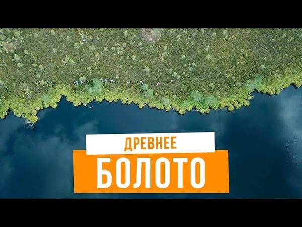 Болото как метафора твоей жизни. Как выбраться из болота - поход в Ельню, Беларусь.