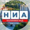 НИА-Калининград