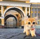 Фотоальбом Бориса Кардопольцева