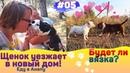 Встреча щенка с новой мамой! Состоится ли вязка собак Еду в Анапу через Крымский Мост. 05