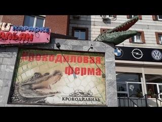 Крокодилвиль