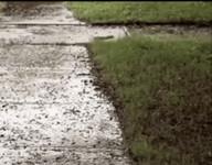 id_66416 Люди: *прячутся от дождя* Дождевые черви:
