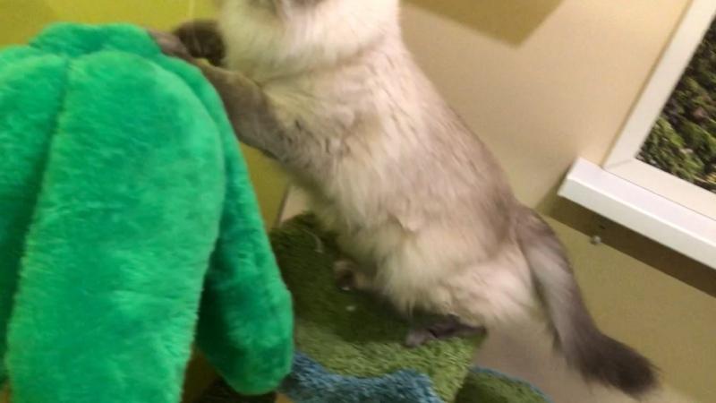 Видео от Гостиница для кошек МуРРляндия