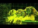 Аттракцион с хищными животными «Дикий мир» под руководством Людмилы Сурковой
