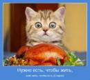 Фотоальбом Татьяны Стрежневой