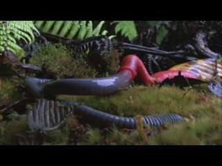 Monster leech swallows giant worm - Wonders of the Monsoon- Episode 4 - BBC Two