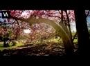 Stream VK Live Simplex - Divergent Mix 01