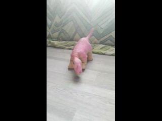 Арси пытается научиться ходить