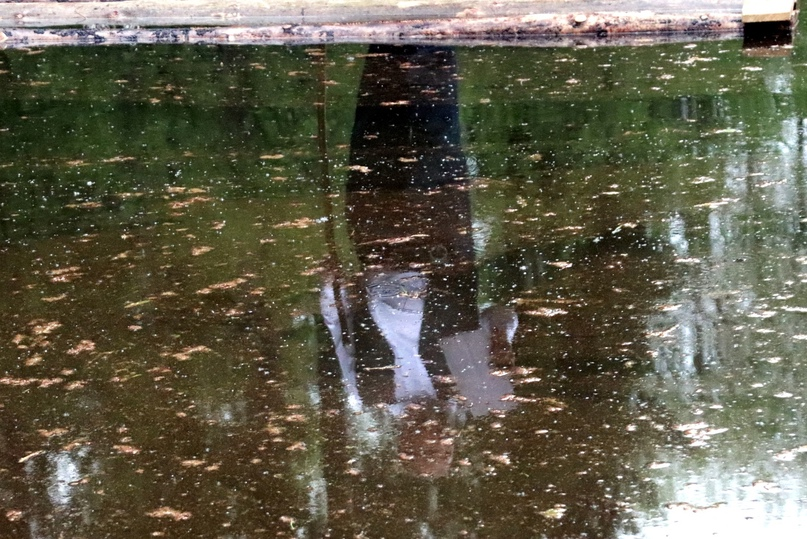 Отражение в усадебном пруду