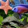Aquapremium Аквариум и рыбки