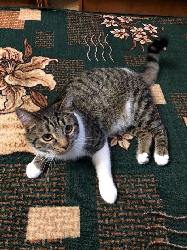 Пожалуйста, помогите найти кота! Отзывается на Тимуру. Ушёл гулять позавчера 30....
