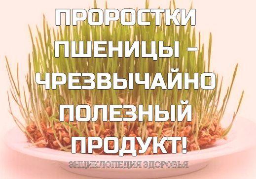 ПРОРОСТКИ ПШЕНИЦЫ - ЧРЕЗВЫЧАЙНО ПОЛЕЗНЫЙ ПРОДУКТ!