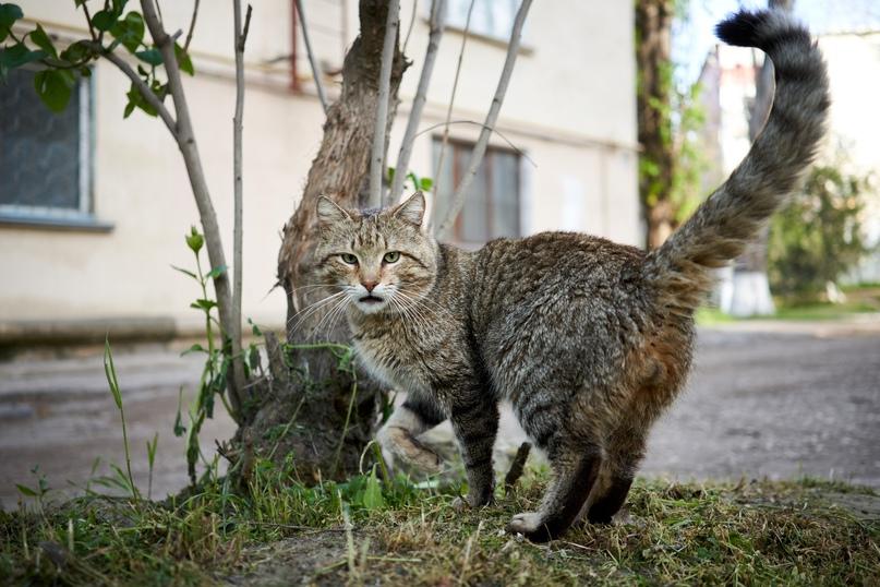 Коты Бориса Панкина FgPwtrGrIRU