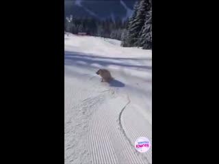 Собака знает толк в зиме))