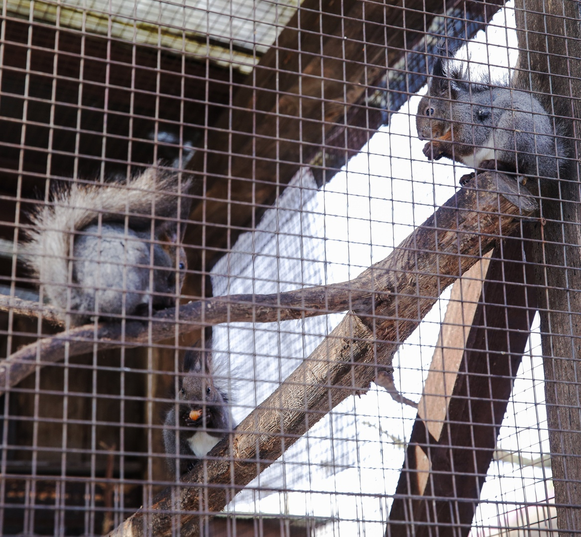 Экологи «Мосприроды» пригласили жителей столицы навестить подопечных вольерного комплекса «Битцевский лес»