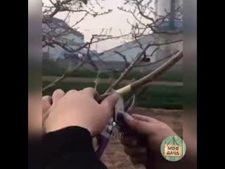 Отличная идеи для дачника