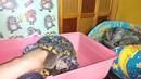 Если африканский ёжик ежиха родила от сына 2 месяца что делать топить ежат или оставить!?