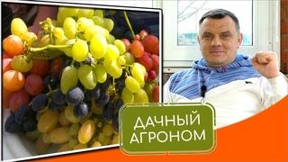 ВИНОГРАД С УСПЕХОМ: 7 ХИТРОСТЕЙ и секретов для тех, кто хочет выращивать виноград #Культпросвет