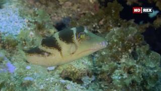 «Дикий мир океана: Филиппины» (Познавательный, природа, животные, путешествие, 2020)