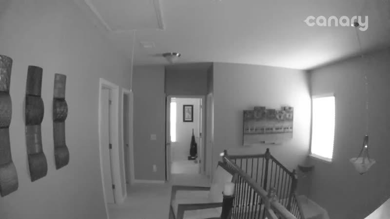 17 10 2019 Джорджия Morrow Эти объекты вызвали движение нашей активированной камеры пока мы ушли Что это такое