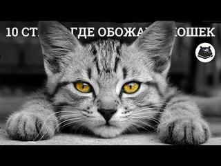 10 стран, где не могут жить без котиков. Выкручиваем мимимиметры на максимум
