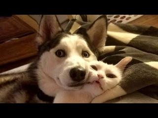 ПРИКОЛЫ С ЖИВОТНЫМИ 😺🐶 Смешные Животные Собаки Смешные Коты Приколы с котами Забавные Животные #85
